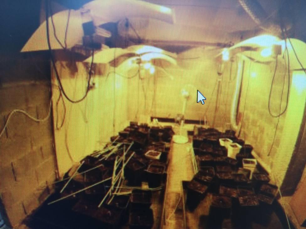 Detenido un exmilitar por cultivo de marihuana en Lugo