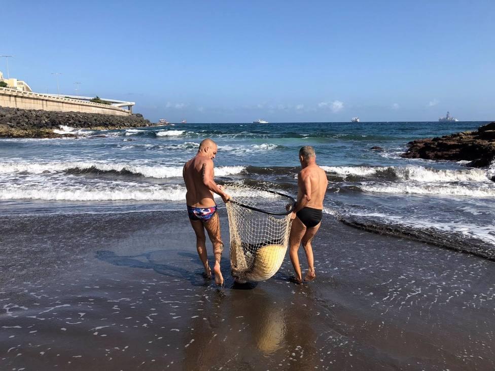Rescatan y sueltan en el mar una mantelina que quedó atrapada en las piscinas de La Laja, en Las Palmas de Gran Canaria
