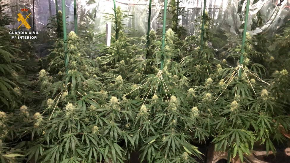 cultivo indoor Arnedo 2