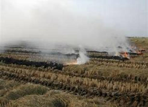 quema de la paja del arroz en La Albufera