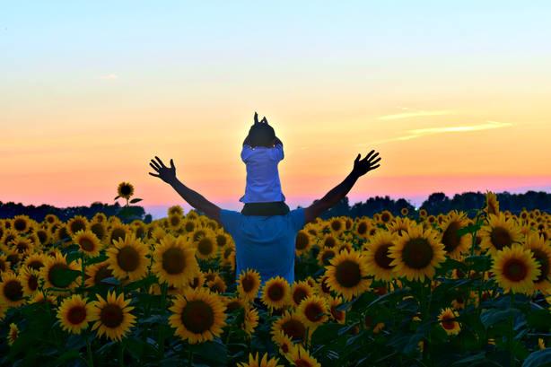 Lista de prioridades para ser feliz: amor arriba del todo