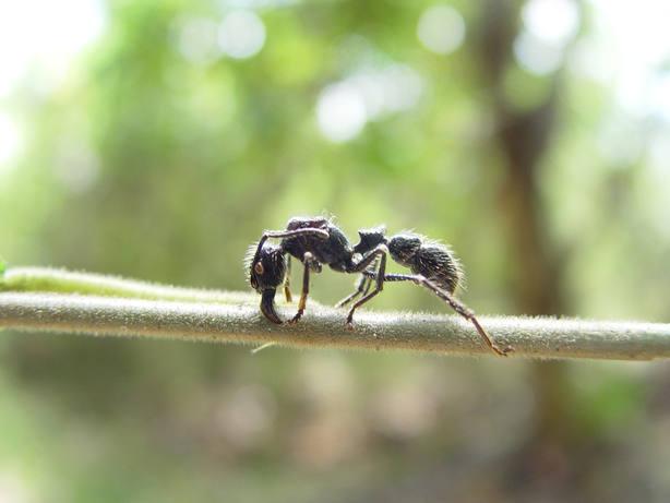 Estas son las picaduras de insecto más dolorosas