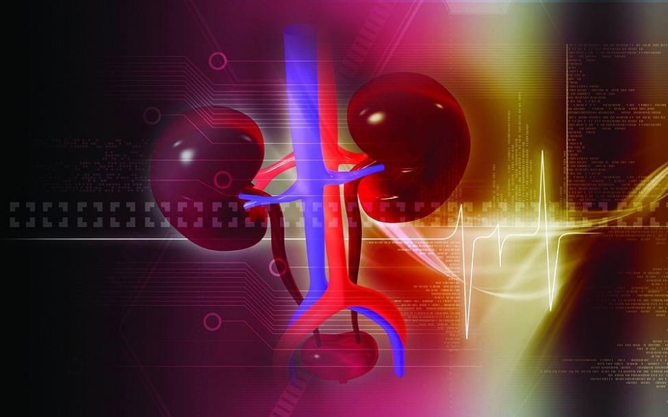 Los científicos reportan un nuevo enfoque para reducir o prevenir la fibrosis renal
