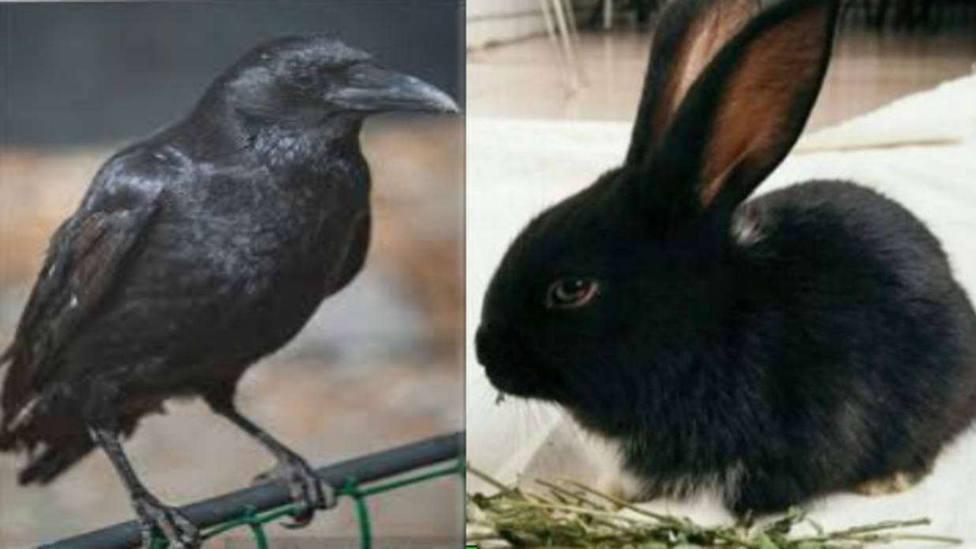 ¿Cuervo o conejo? Esta es la nueva ilusión óptica que divide a las redes