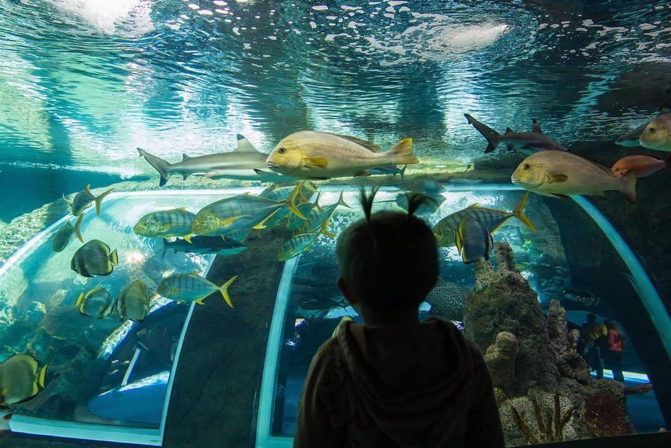 Granada.- El Parque de las Ciencias celebra el Día de los Museos promoviendo la salud