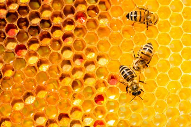 La UE prohíbe el uso de tres insecticidas dañinos para las abejas