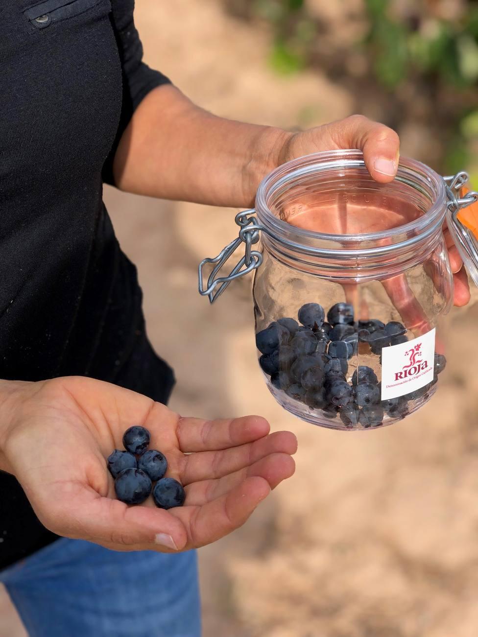 La vendimia avanza notablemente en la DOC Rioja, según el Consejo Regulador