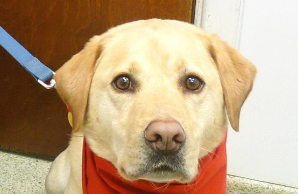 Un perro se convierte en un héroe después de salvar más de cien vidas de otros perros