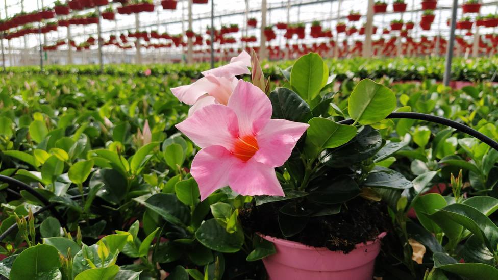 Andalucía abre el plazo para solicitar ayudas por la destrucción de flores y plantas ornamentales