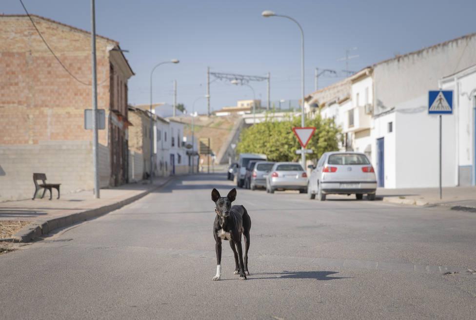 Pacma denuncia la muerte de un perro asfixiado por cuatro personas el pasado sábado