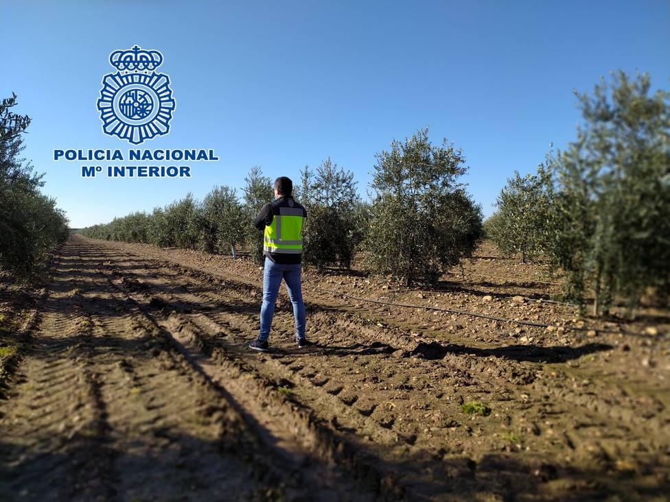 Nueve detenidos en una operación contra el favorecimiento de la inmigración irregular