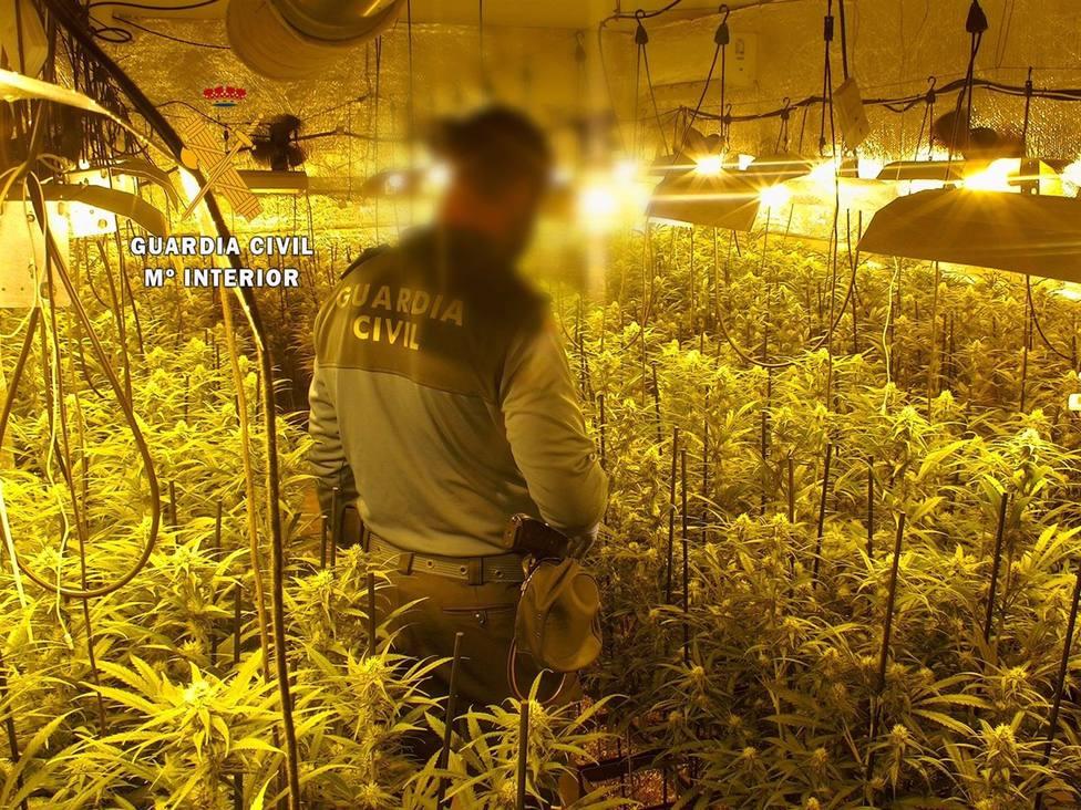 Sucesos.- Detenidas tres jóvenes por cultivo de marihuana y desmantelada una plantación indoor en Guijo de Granadilla