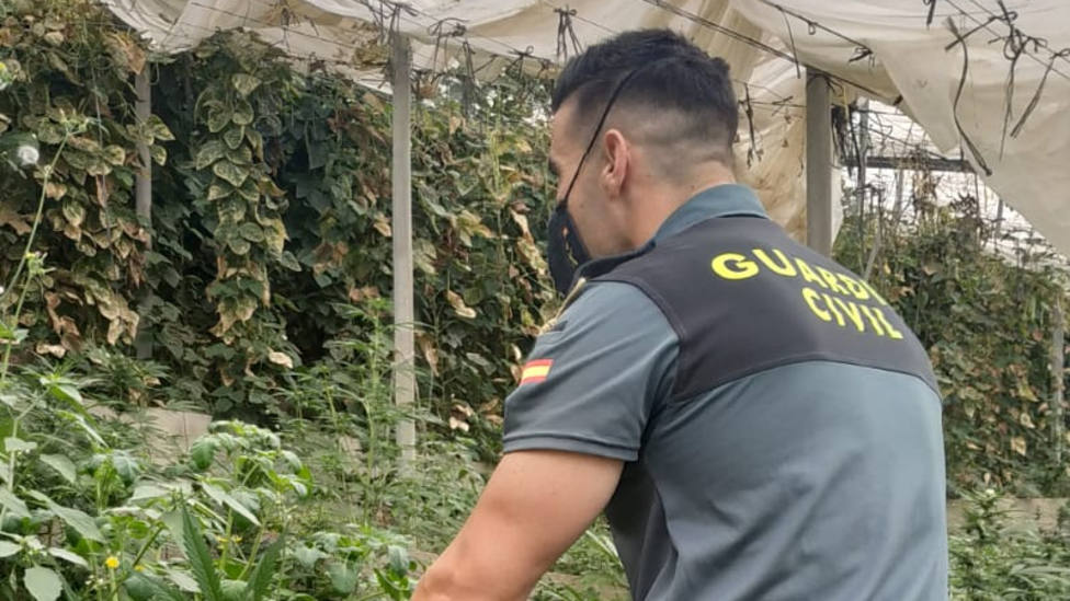 6 detenidos por cultivo de marihuana en dos invernaderos de Rubite y La Mamola