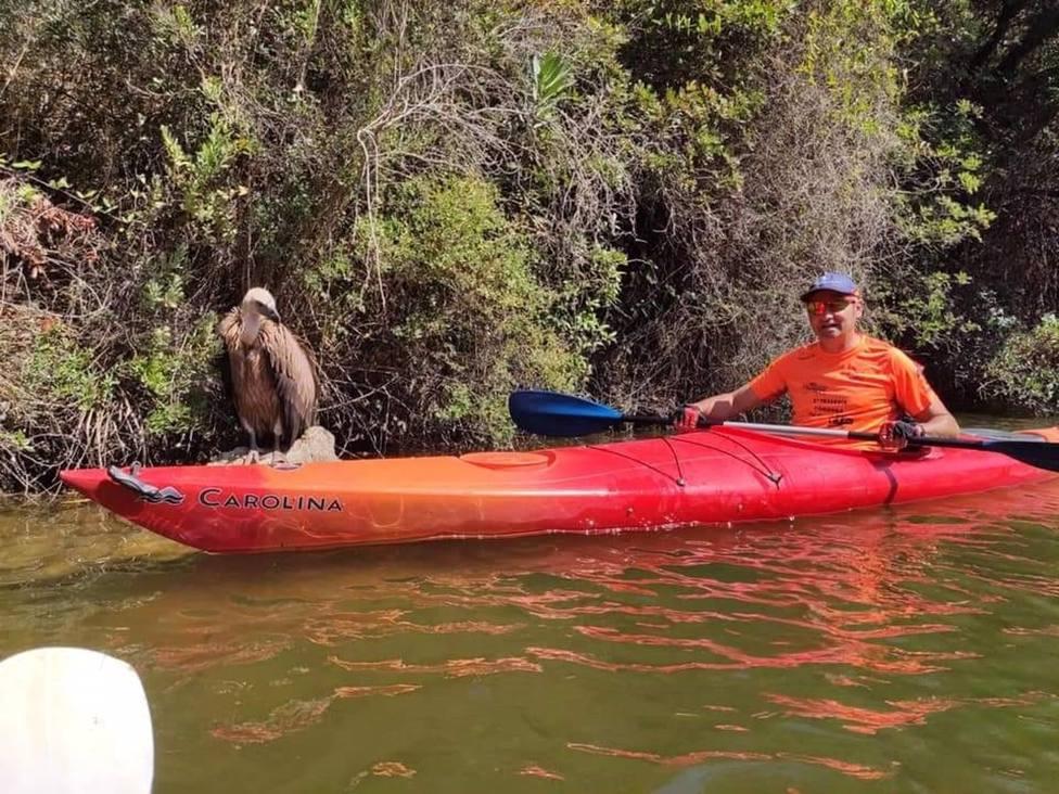 Rescatado un buitre leonado muy débil en el pantano del Bembézar