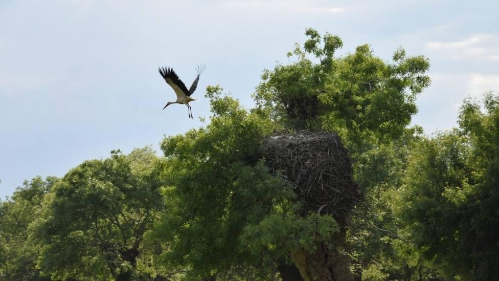 Cigüeña volando junto a su nido /Foto: UPM