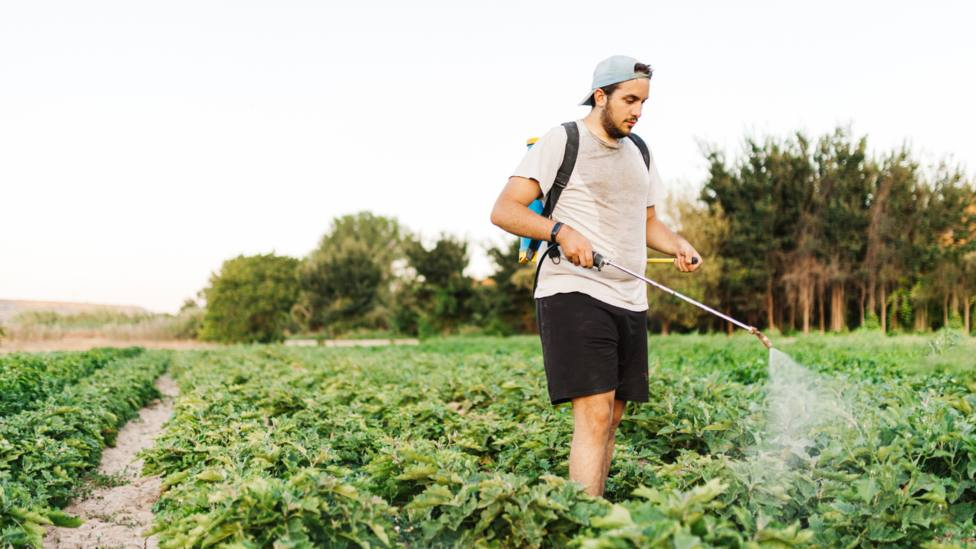 Un joven aplicando producto fitosanitarios