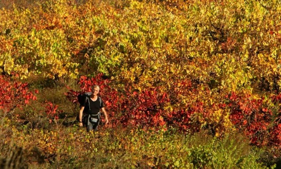 El otoño que viste al turismo del Bierzo