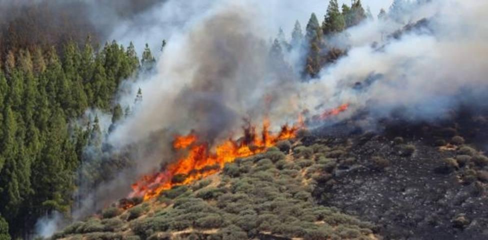 Controlado el incendio de Gran Canaria aunque se mantiene el nivel de emergencia por ola de calor