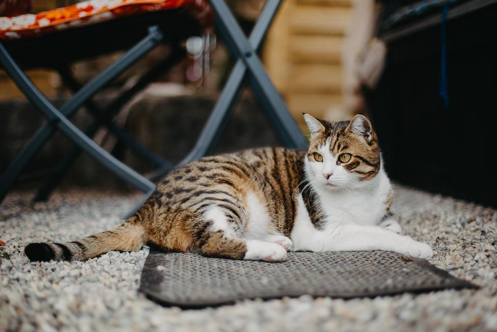 ¿Por qué los gatos son capaces de encontrar el camino de vuelta a casa?