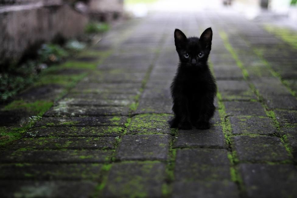 ¿Cuántos años tendrías si fueras un gato? La tabla que te revela tu edad felina