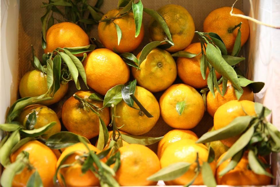 El Gobierno pedirá a la UE que evalúe el impacto del acuerdo con Sudáfrica en el sector citrícola