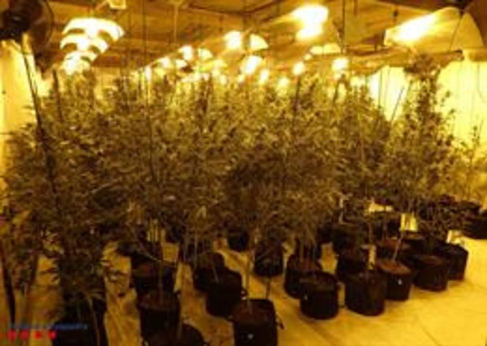 Plantación de marihuana en una casa de Salou (Tarragona)