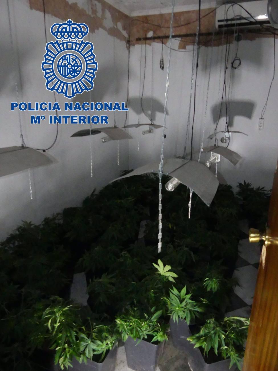 Plantación de marihuana en una vivienda ocupada de Badajoz