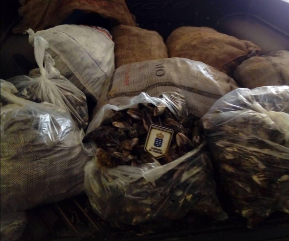 Incautados más de 480 kilos de marisco y pescado ilegal durante Semana Santa