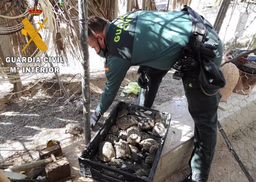 Detenido en Carboneras por tener en su vivienda 28 ejemplares de tortuga mora sin documentar