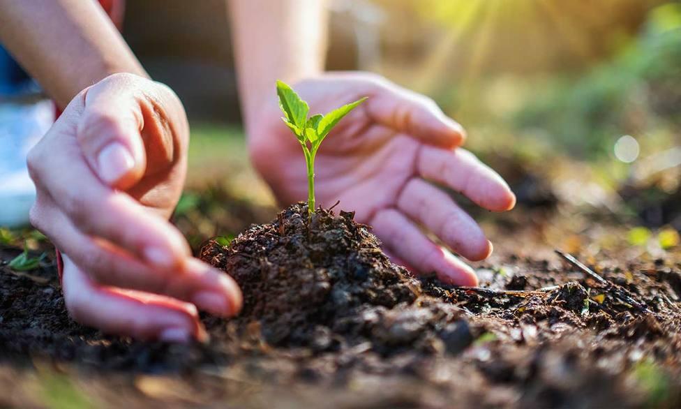Los principales incentivos fiscales para cuidar el medio ambiente