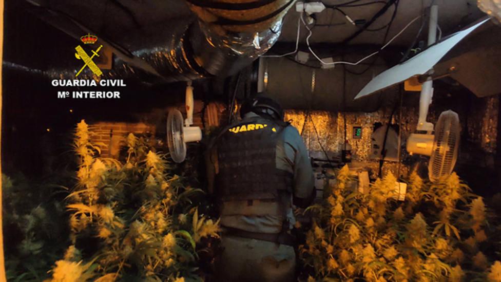 ctv-w4v-plantacion-marihuana-indoor-guadalajara-4