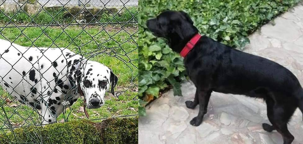 Perros desaparecidos