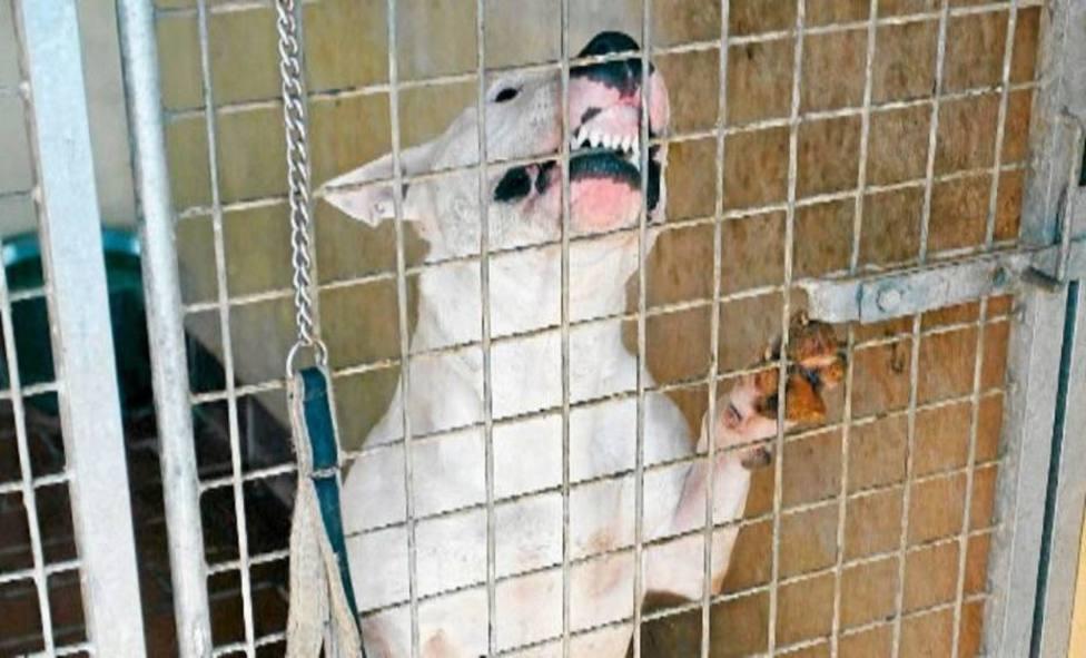 Tres personas atendidas por mordeduras de perros en Logroño