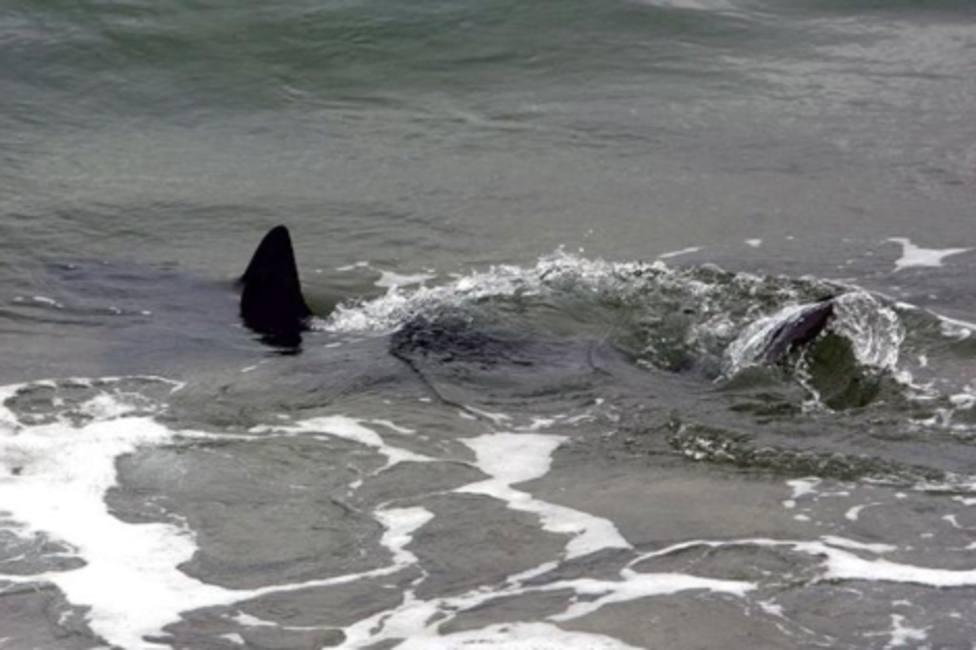 Pánico por un tiburón de más de 5 metros que rodea a una familia