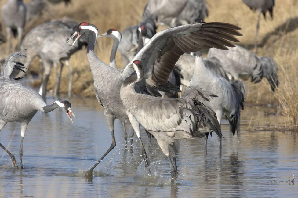 Las aves migratorias se reducen a medida que el clima se calienta, según un análisis de registros de cuatro décadas