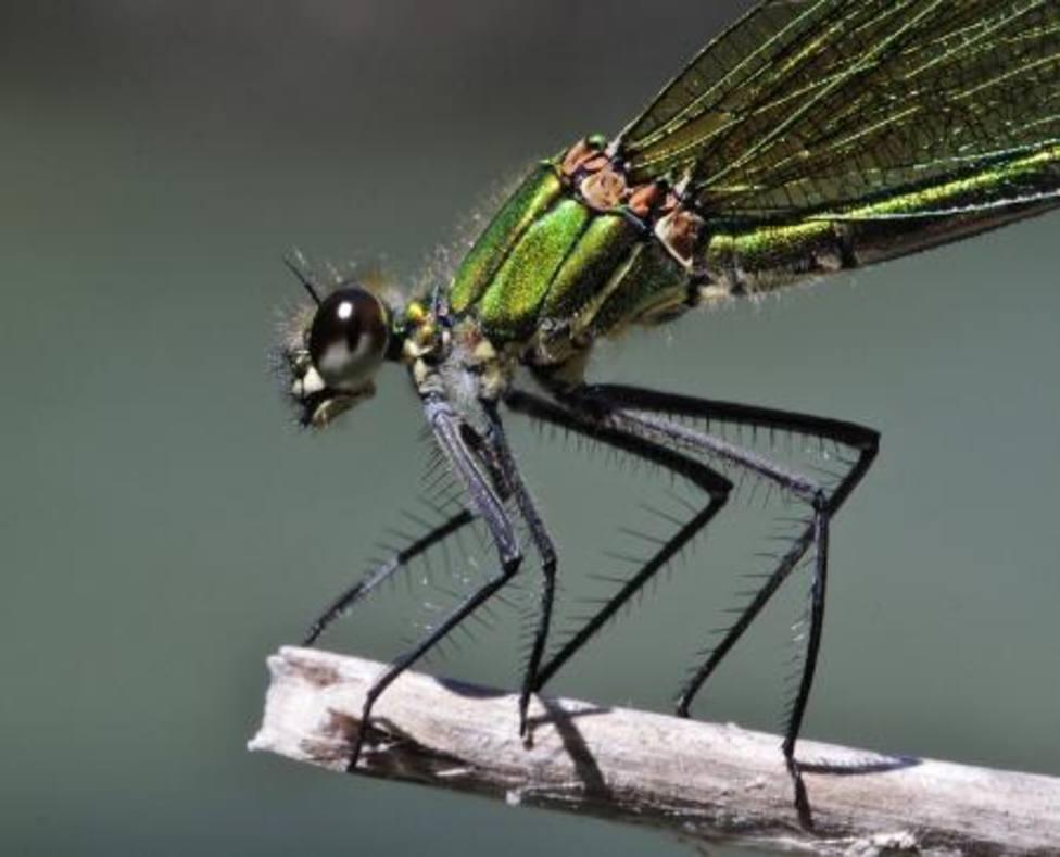 Exposición insectos