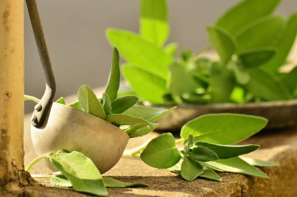ctv-ohg-curso-ule-sobre-plantas-silvestres-y-condimentarias-02