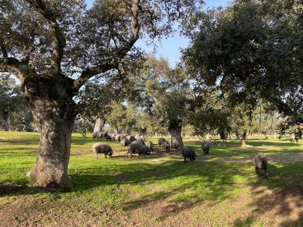 Renovado en Pozoblanco el convenio de El Dehesafío para la regeneración de la dehesa de Los Pedroches
