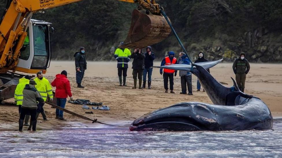Retirada la ballena varada en la playa de Serantes