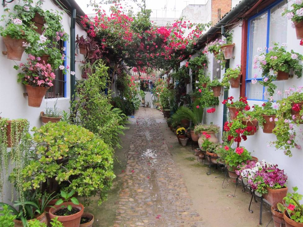 Los patios de Córdoba reciben más de 19.000 visitas en la primera jornada del concurso en su centenario