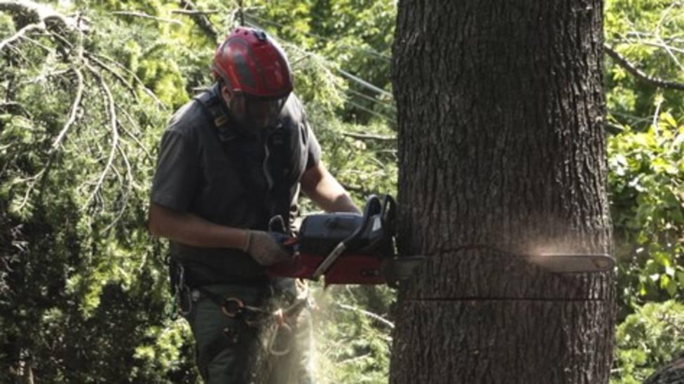 Un operario tala un árbol