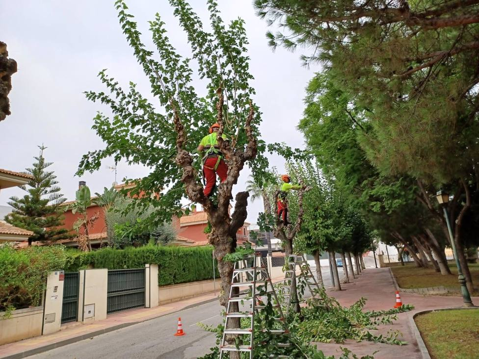 Comienza la poda de las más de 20.000 moreras que hay en el municipio de Murcia
