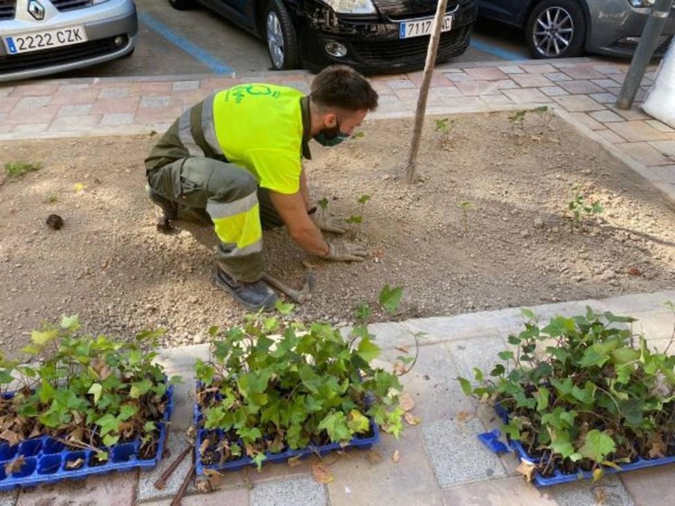 El Plan Hiedra viste de verde el barrio de Santa Eulalia creando más espacios naturalizados