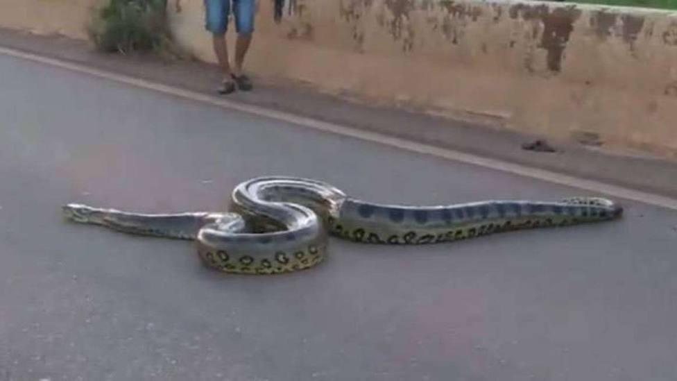 Así cortaron una carretera de Brasil tras la inesperada visita de... una anaconda gigante
