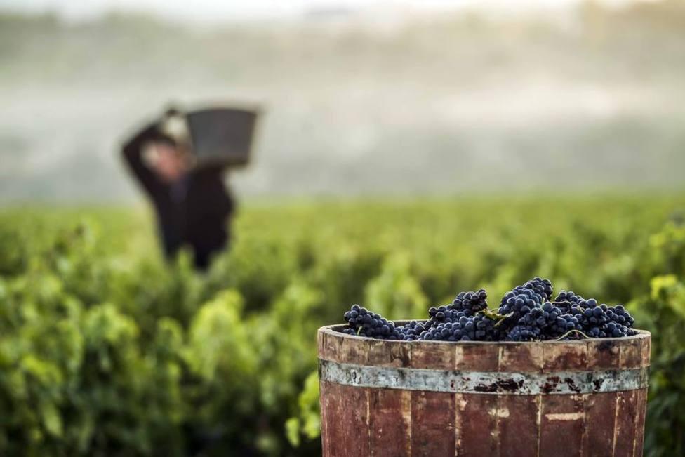 2019 será la cosecha de Rioja