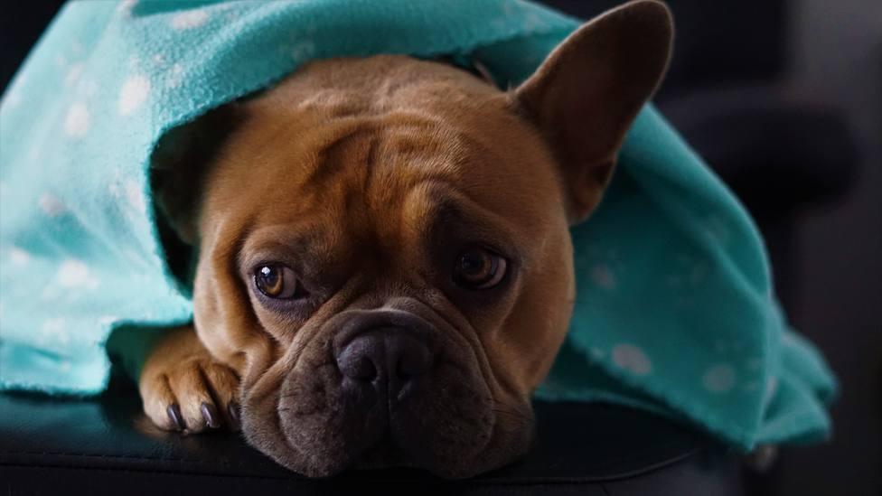 Dependiendo de la raza, hay perros más frioleros que otros