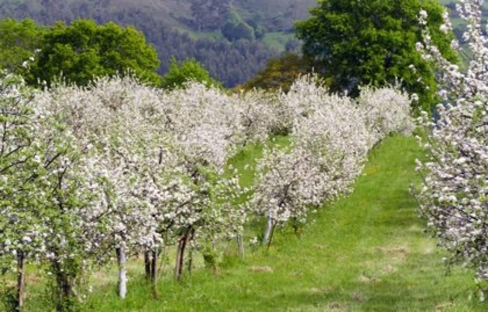 Foto Pomarada con manzanos en flor