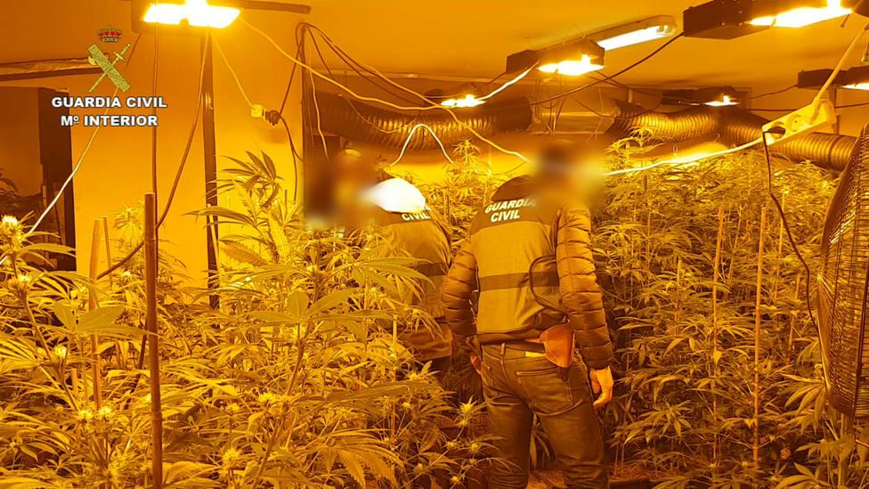 Modificación genética de marihuana