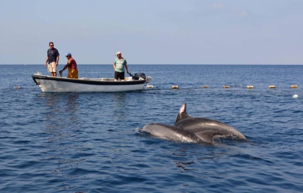 Liberados dos delfines mulares atrapados en la almadraba de La Azohía