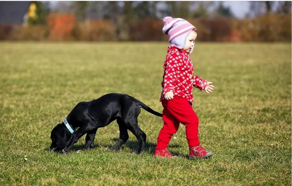 Un perro se come la mascota de un niño de tres años y su reacción se ha hecho viral en todo el mundo